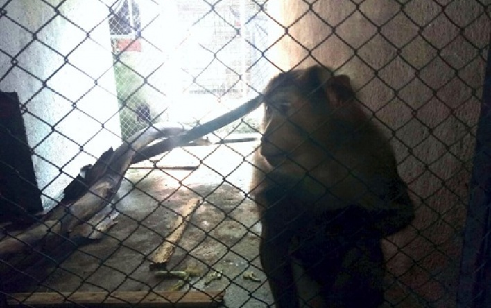 Rescuing one individual of primate to release back into the wild